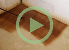 Watch the full room carpet dyeing video to see how it's done.